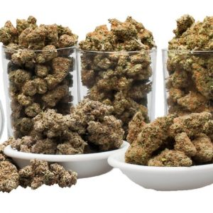 Amazing Weekly OUNCE Special - The Healing Co